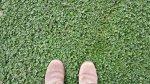 brązowe buty na zielonej łące